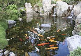 Пруды для разведения рыб